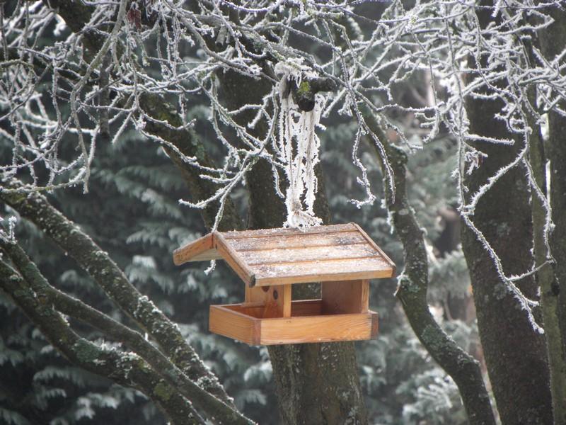 cabane-a-oiseaux
