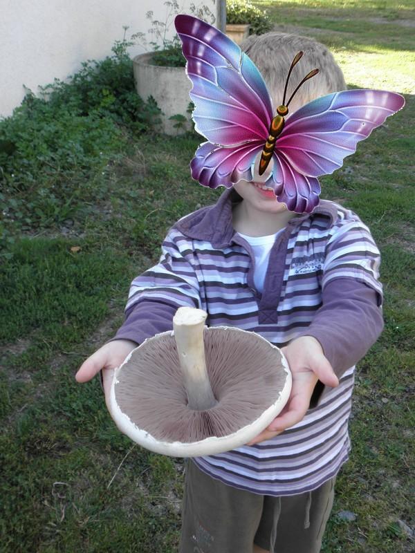 champignon-agaric-des-boi