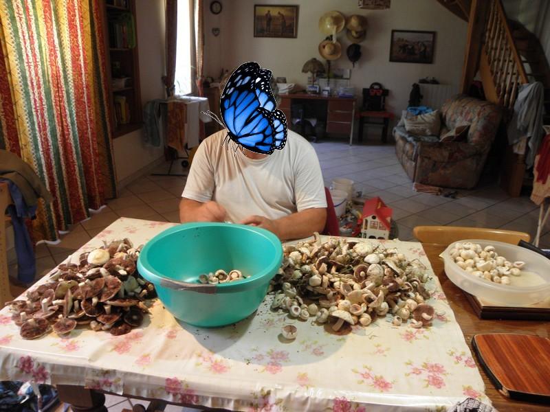 champignons-agaric-des-pres