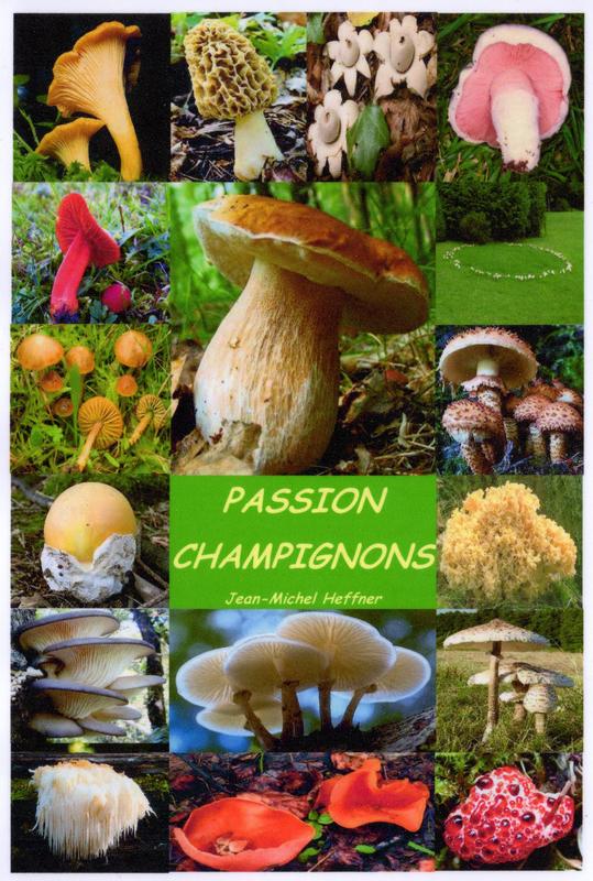 passion-champignons
