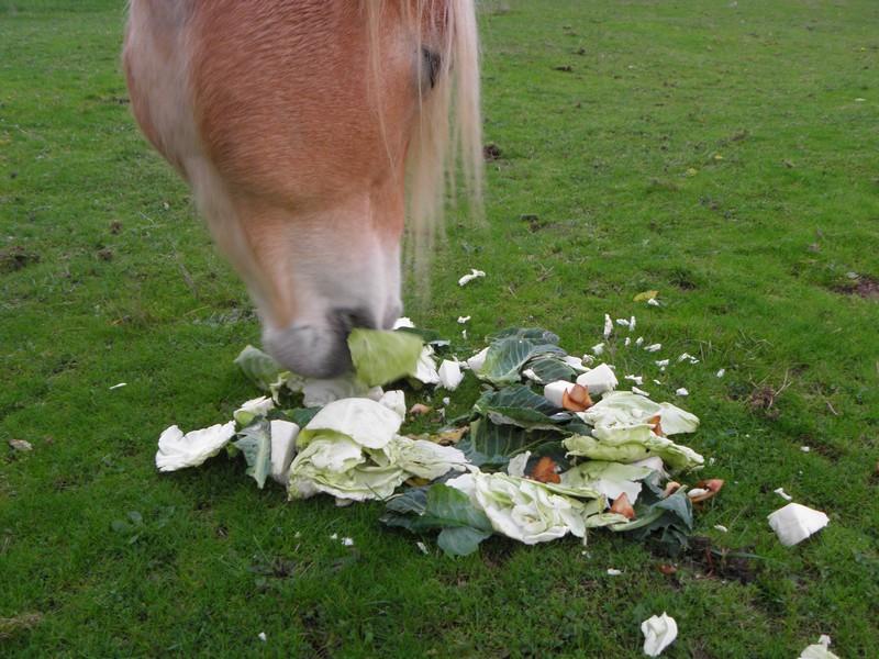 restes-dechets-vert-donne-aux-animaux-chevaux