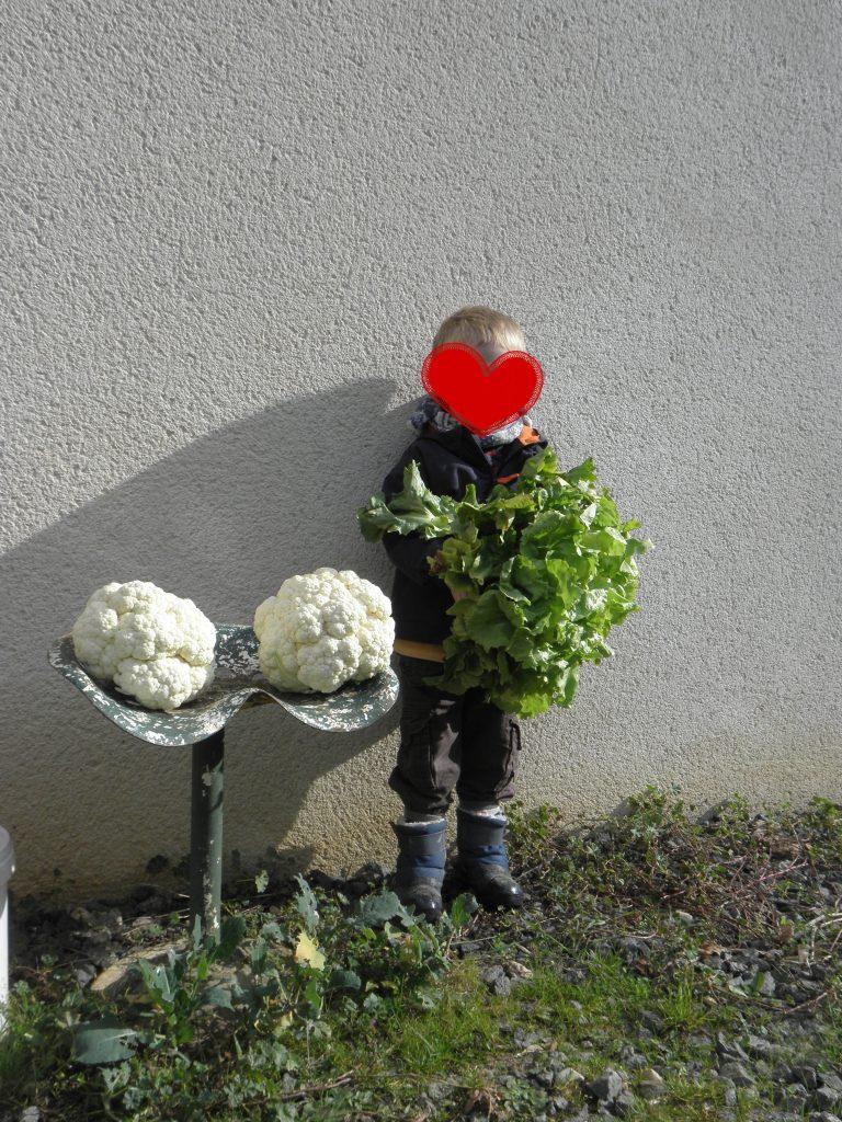 choux-fleurs-et-scarole