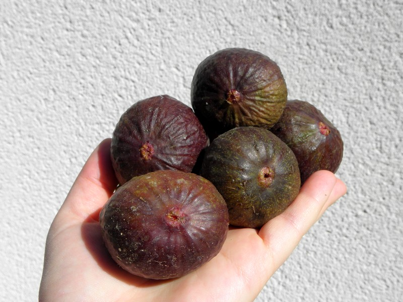 figues-brown-turkey