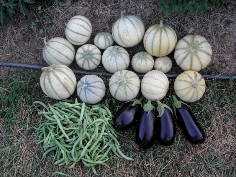 melons-aubergines-haricots-verts
