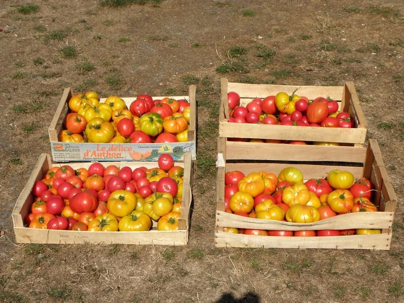 tomates-30-kilos