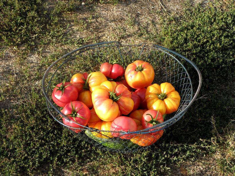 tomates-ananas-rose-de-bern-concombres